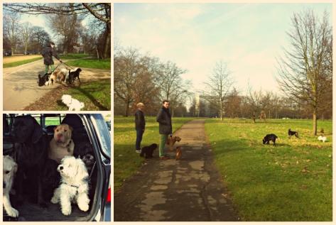 Dog walking, Hyde Park